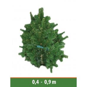 Schnittgrün Nordmanntanne